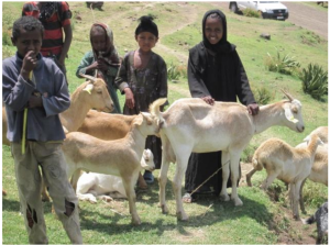 The types of technology transfer varied between the programs, ranging from technological devices to improve irrigation or monitoring to knowledge transfer programs, such as a program to demonstrate and promote drought resistant livestock and crops.  Here, children exhibit goats their family obtained through the CwDCC program.  (UNDP ALM Report, 2012)